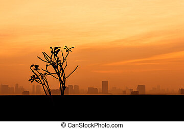 tree silhouette with city and sunset background