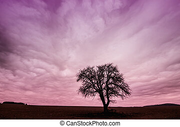 Tree Silhouette with Colorful Pink Sky