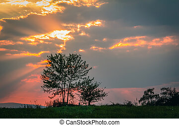 Tree silhouette with gold sunset sky