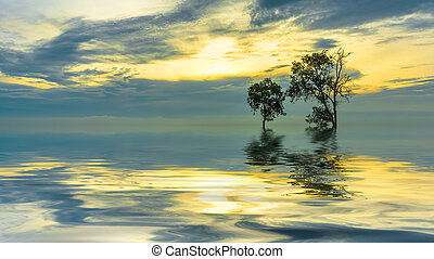 Tree silhouette with orange sunset reflection