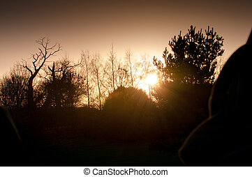 tree silhouette with sunset background