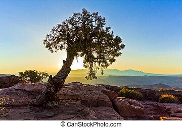 Tree Silhouettes Above the Canyonlands of Arizona