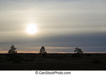 Tree silhouettes in a sullen landscape