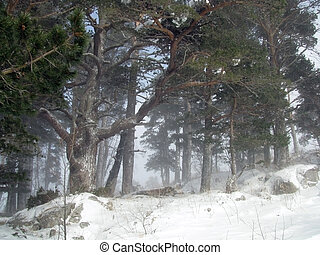 tree, snow; snow, nature; landscape