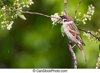 Tree sparrow bird on a branch