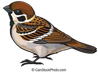 tree sparrow wild european bird, side view illustration isolated on white background