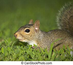 Tree squirrel portrait