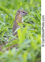 Tree squirrel sitting in wet green grass on ground