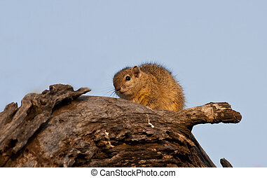 Tree squirrel sitting on a branch in the morning sun