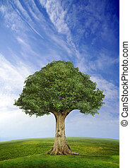 Tree standing alone in a field over blue sky