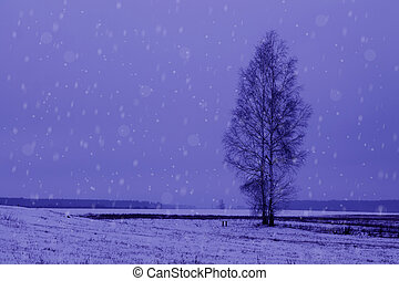 tree stands in a field in fog and snow