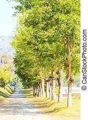 Tree street