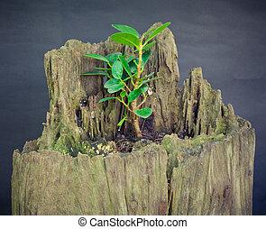 Tree stump and green leaf