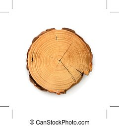 Tree stump, round cut with annual rings, isolated on white background