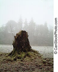 Tree stump in fog - Decaying tree stump on a frosty foggy...