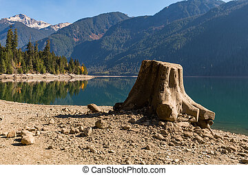 Tree stump on the dry shore of Baker Lake in North Cascades