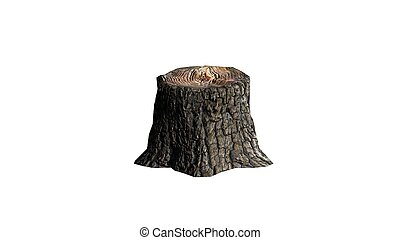 Tree stump - on white background