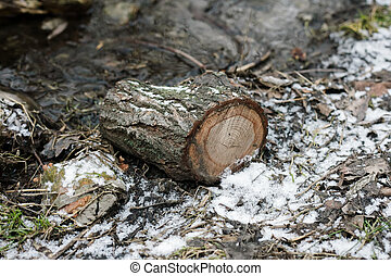 Tree stumps in the winter and snow