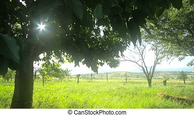 tree sun ray