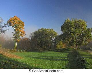 Tree, sunbeam, fied, sunlight, fog