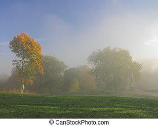 Tree, sunbeam, landscape, fog