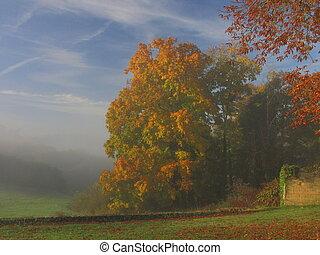 Tree, sunbeam, sunray, sunlight, fog