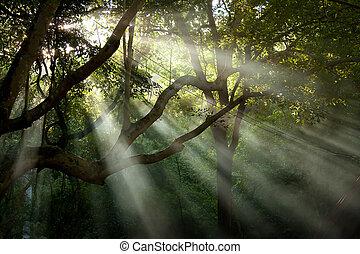 tree sunray