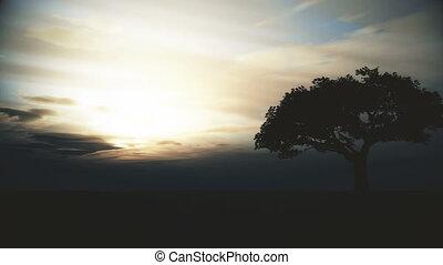 tree sunset in field 4k