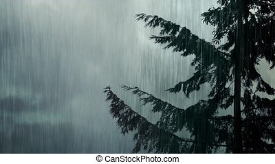 Tree Swaying In Wind And Rain
