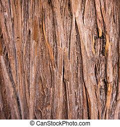 tree texture.  Tree background.  wood texture