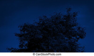 Tree Top Blowing Around At Night - Top of tree in breeze on...