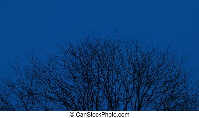 Tree Top Branches At Night In Breeze - Tree tops sway in the...