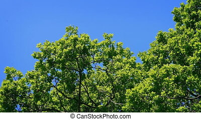 Tree Top In The Sun - Treetop on a bright sunny day