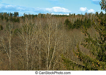 tree tops, forest view from above, mixed coniferous and deciduous forest