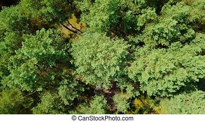 Tree tops from above - From above aerial shot taken with...