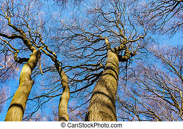 Tree tops in the forest with blue sky