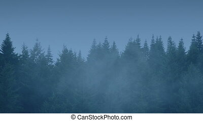 Tree Tops On Misty Evening