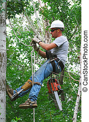 Tree Trimmer - Man climbing tree with ropes and chain saw to...