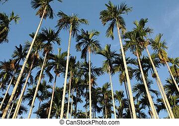 tree tropical palm