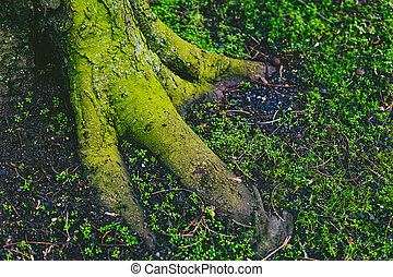 tree trunk and roots covered in intensively green moss