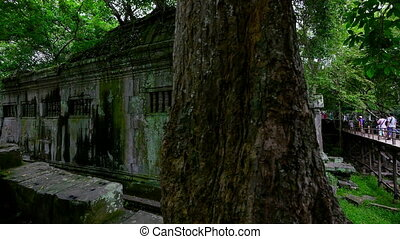 Tree trunk and temple walls and bridge with people - A...