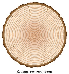 Tree Trunk Annual Rings Section Isolated on White...