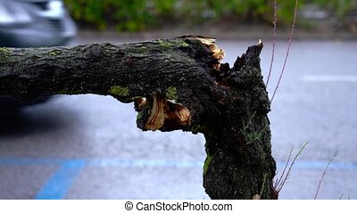 Tree trunk broken by wind against roadway and passing car - ...
