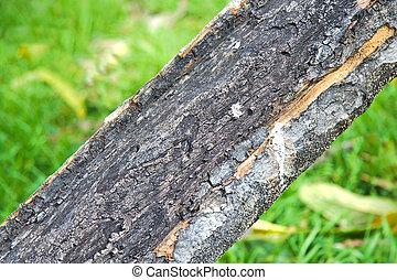 Tree trunk burned by thunderbolt strike