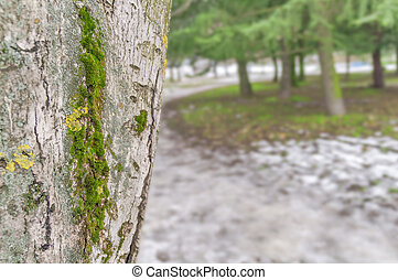 Tree trunk close isolated from background