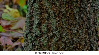 Tree trunk closeup in rain forest.