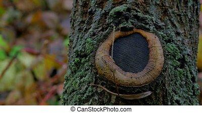 Tree trunk closeup in rain forest.