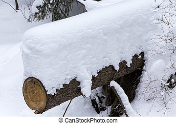 Tree trunk covered with fresh snow in winter