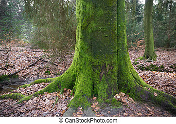tree trunk covered with moss - large tree trunk covered with...