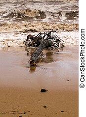 Tree trunk died on a beach